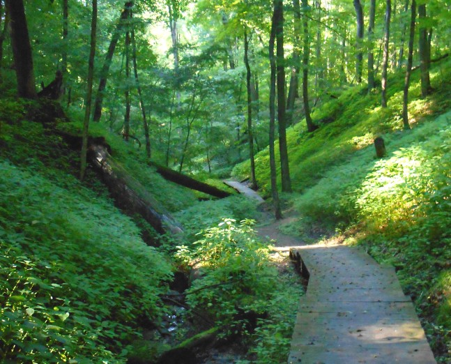 Bath Hills Walk