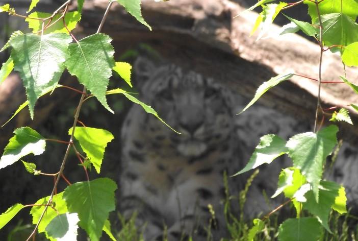 Leopard Warm Fuzzy