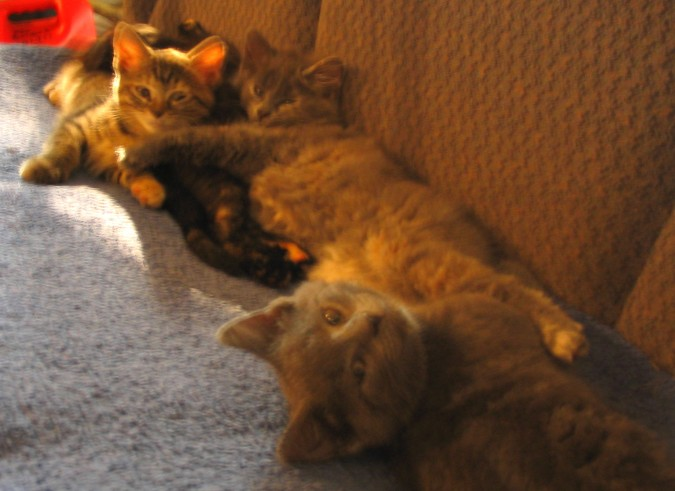 smokeys-kittens-couch