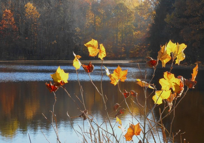 oak-hill-pond-fall