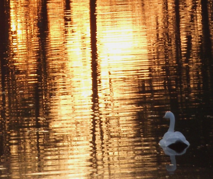 swan-memorial-park-reflection