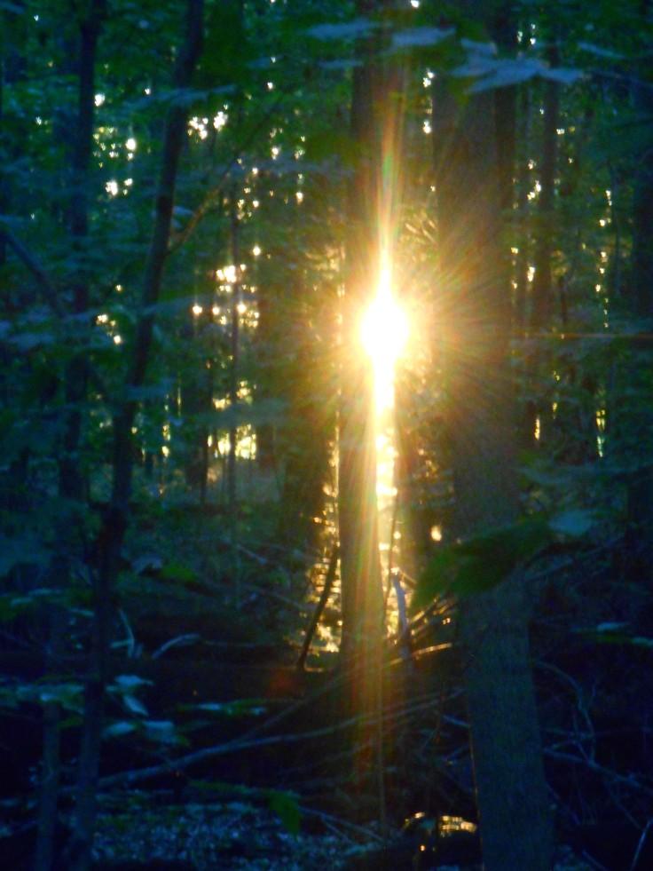Light in Woods