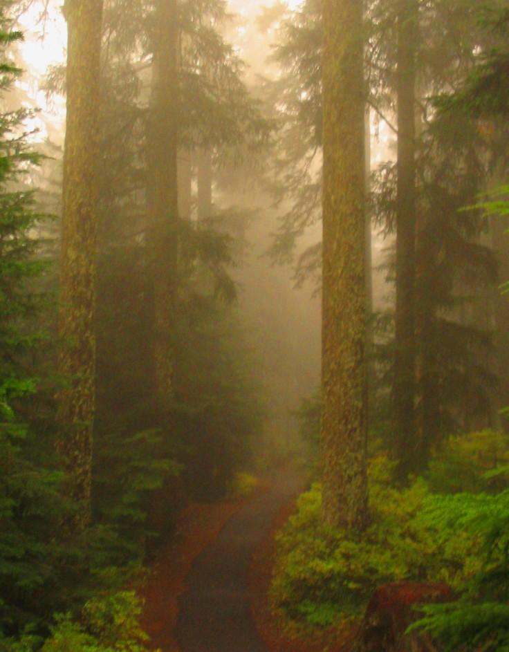 Larch Mtn Misty Path