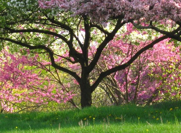 spring seiberling