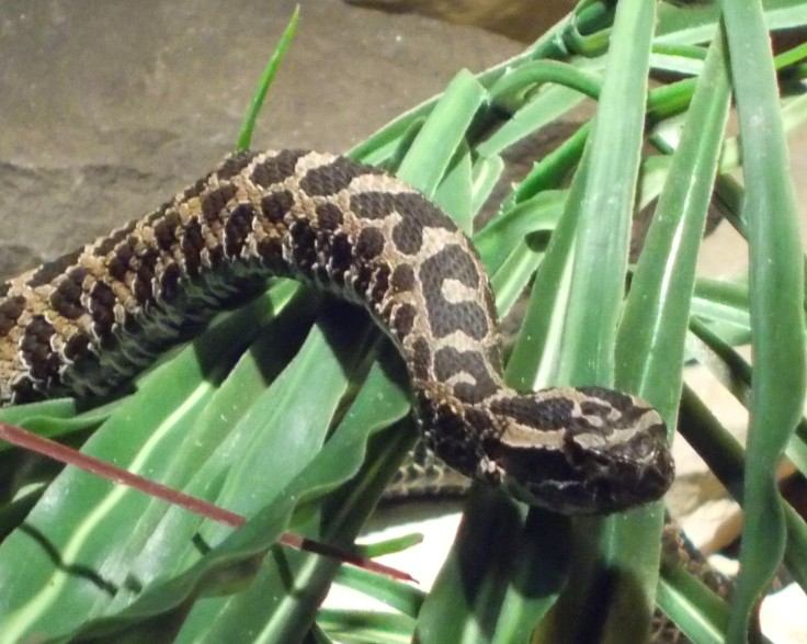 Columb Zoo Snake