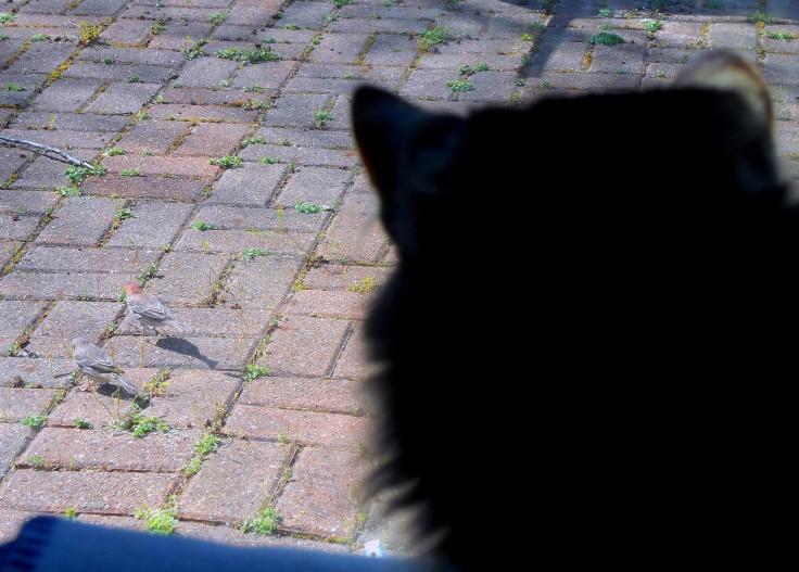 Cat Window Birds