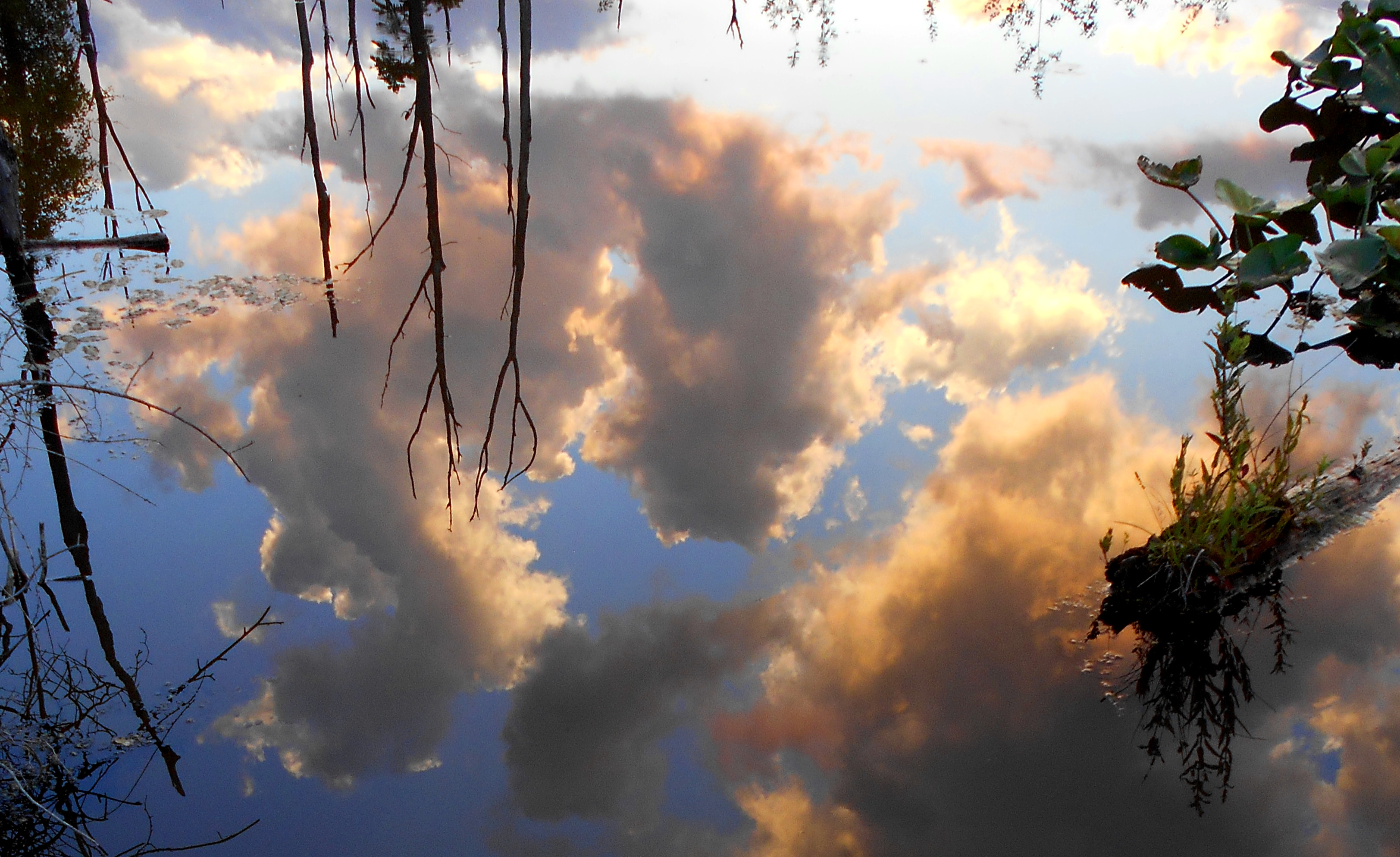 Lilly Reflection Clouds