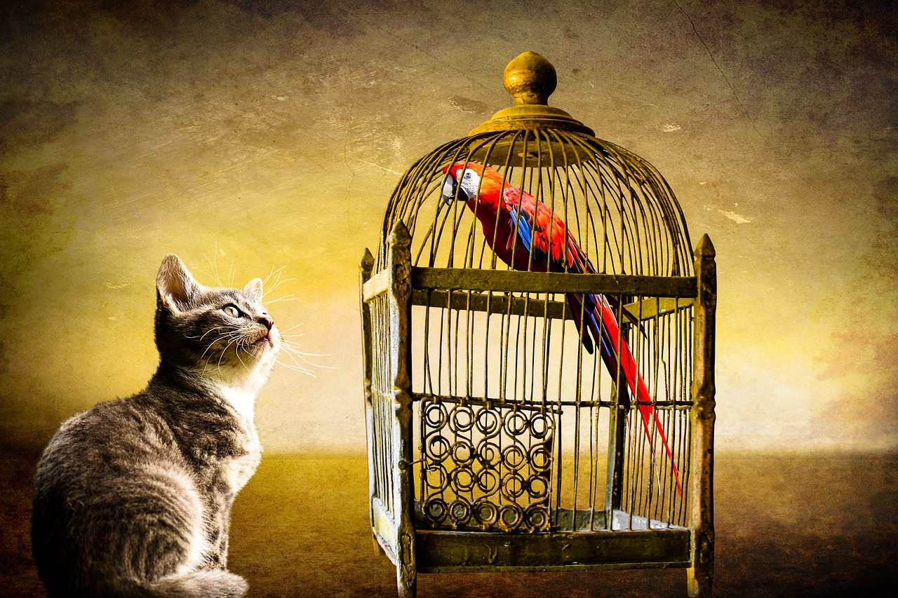 Bird Cage Cat