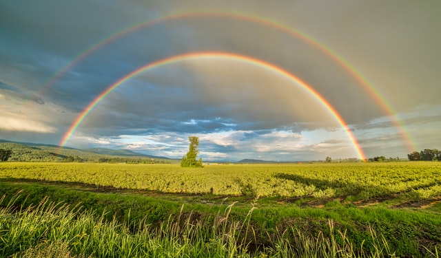 two rainbows field