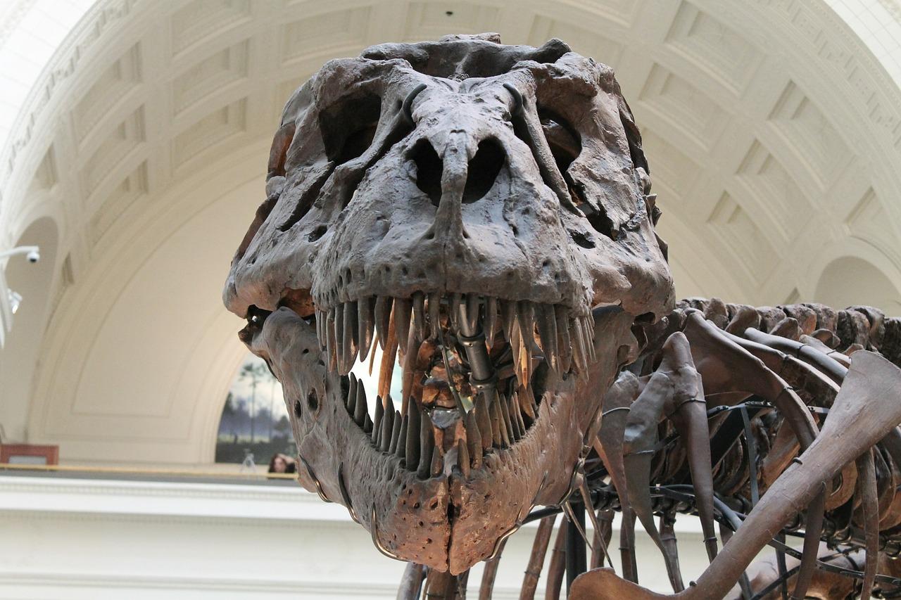 Tyrannosaurus Skeleton Mouth